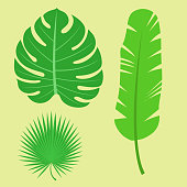 Tropical leaves summer jungle green palm leaf exotic design hawaii monstera botanical flora vector illustration