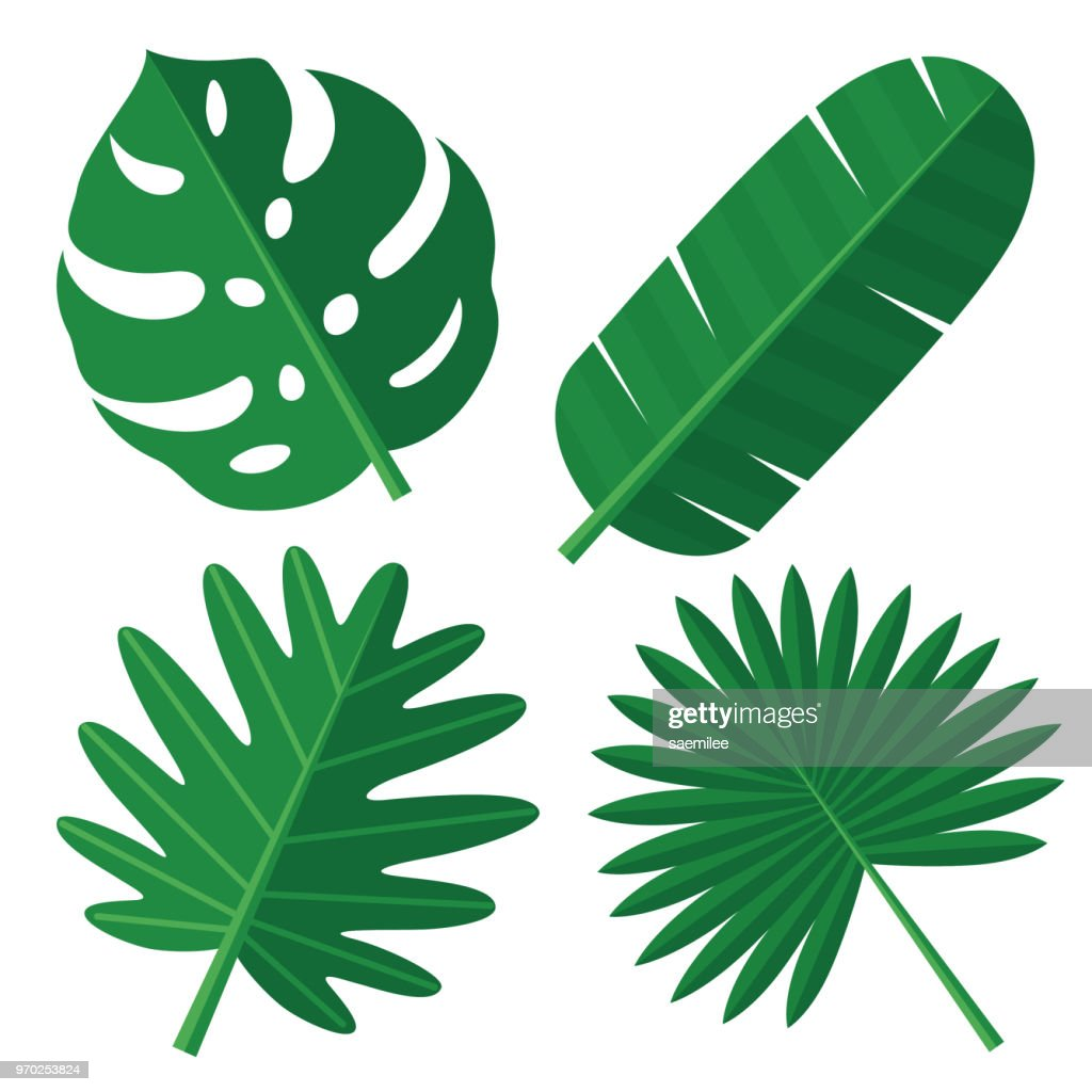 tropical leaves stock vector getty images