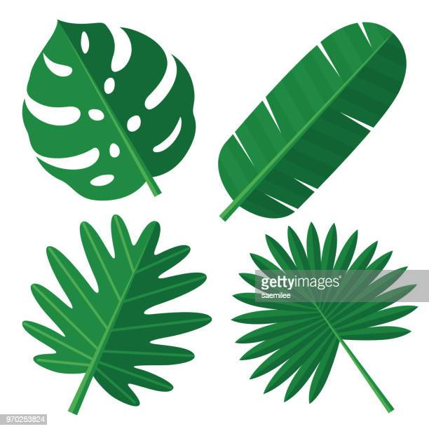 tropical leaves - bush stock illustrations