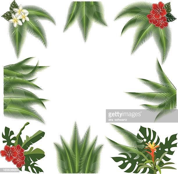 ilustrações, clipart, desenhos animados e ícones de enfeites tropicais - cocos plant