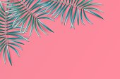Tropical palm leaves frame on coral backdrop. Summer tropical background