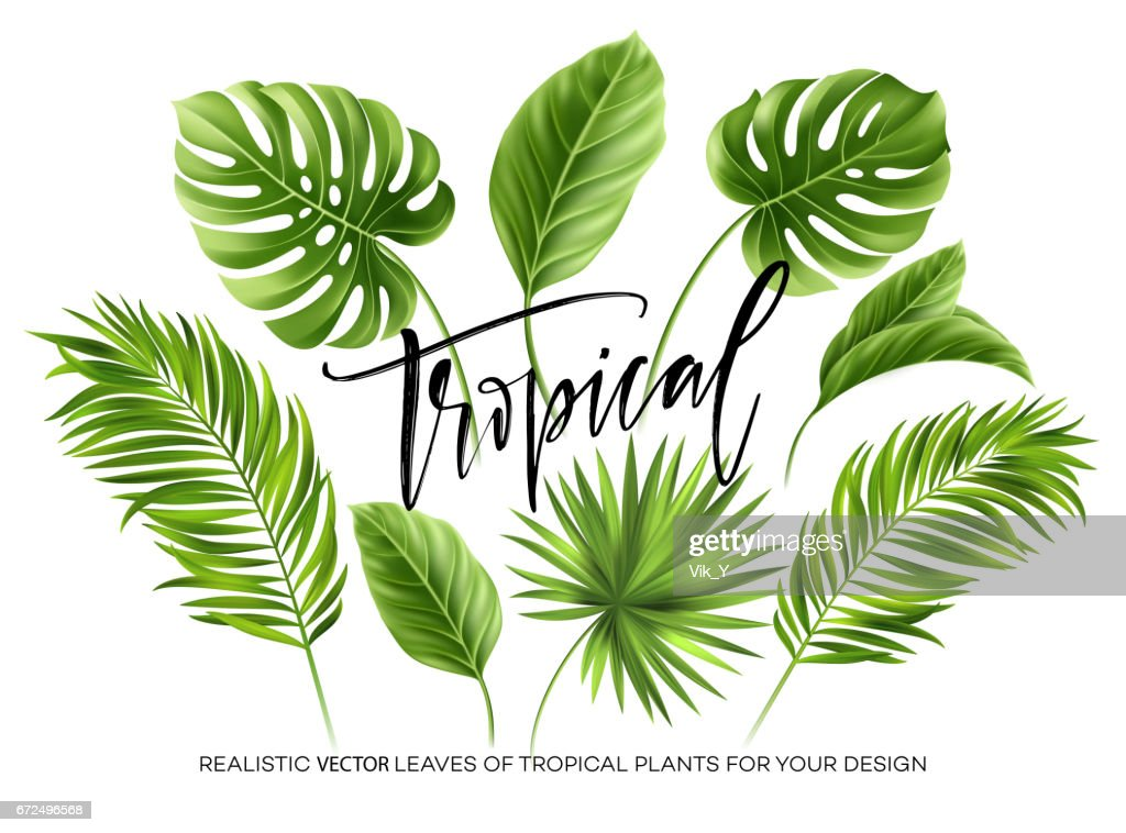 Tropical palm leaves set isolated on white background. Vector illustration