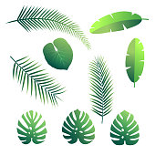 Tropical palm leaves. Set of vector palms. Exotic rainforest leaves