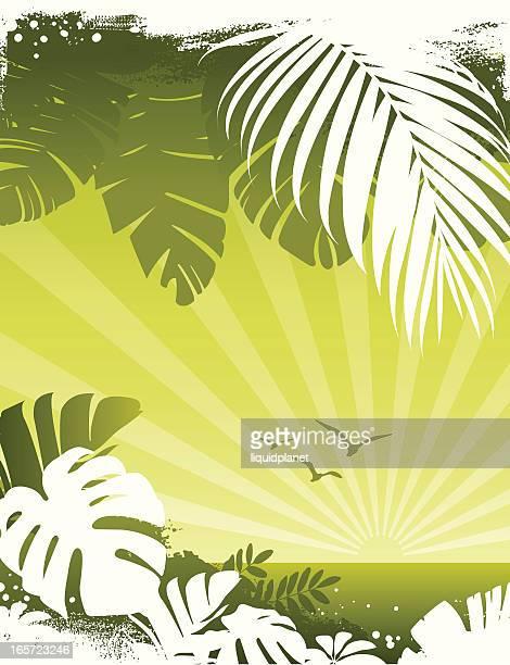 ilustrações de stock, clip art, desenhos animados e ícones de palmeira tropical ao pôr do sol - folha de bananeira