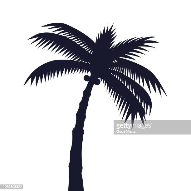 tropical palm tree or coconut tree silhouette - coconut leaf stock illustrations, clip art, cartoons, & icons