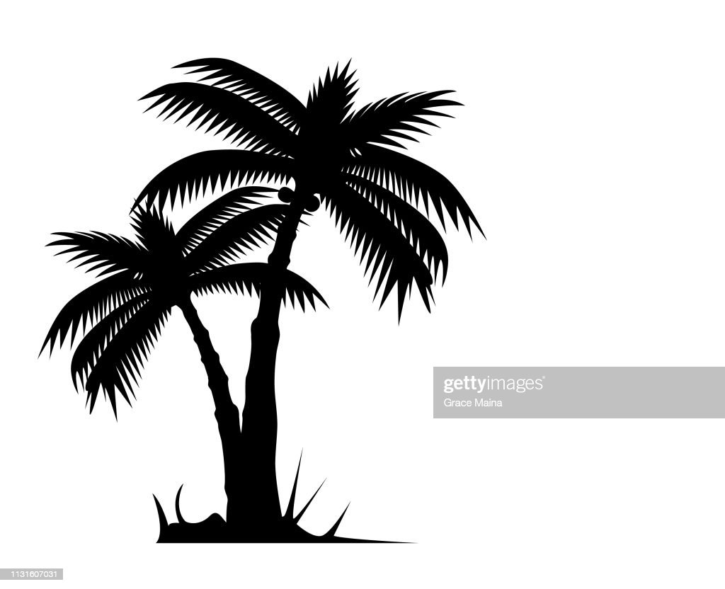 Tropical Palm Tree Or Coconut Tree Silhouette : stock illustration