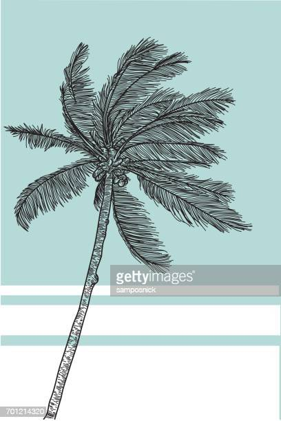 tropical palm tree - coconut palm tree stock illustrations, clip art, cartoons, & icons