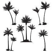 Tropical palm trees, black silhouettes.