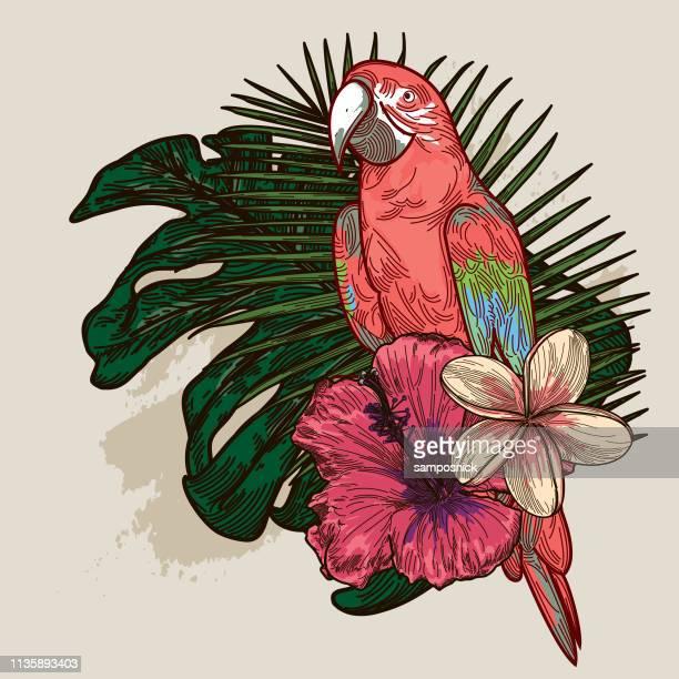 illustrations, cliparts, dessins animés et icônes de plante tropicale et bouquet floral - perroquet