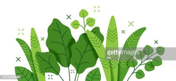 tropische pflanze und laub wachstum moderne hintergrund-lager-illustration - pflanze stock-grafiken, -clipart, -cartoons und -symbole