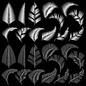 Tropical plant illustration material,