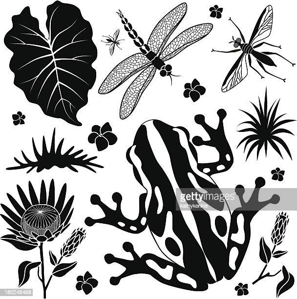 tropical plants and animals