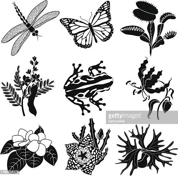tropical plants and animals - venus flytrap stock illustrations, clip art, cartoons, & icons