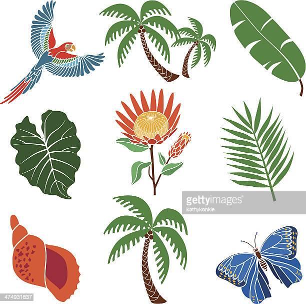 Plantes tropicales et les animaux