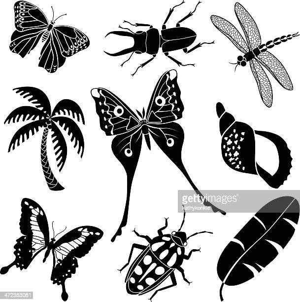 tropical plants and insects