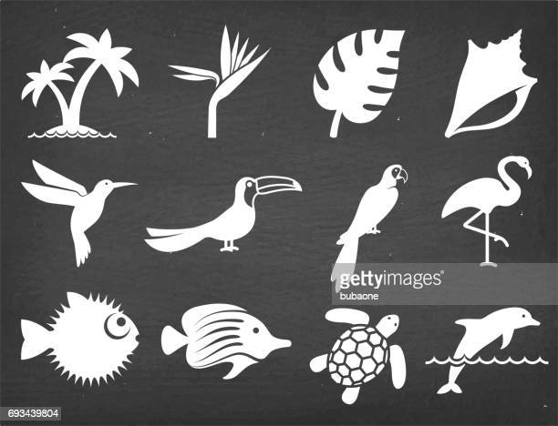 ilustrações de stock, clip art, desenhos animados e ícones de tropical plants fish and birds on black chalkboard vector icons - beija flor