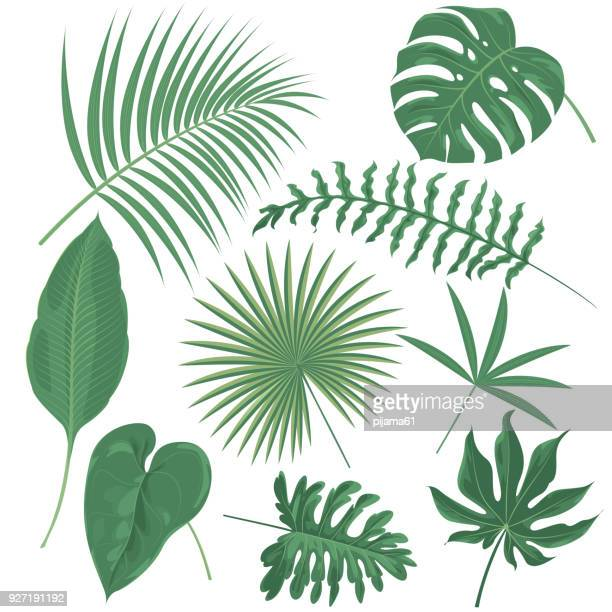 tropical plants - coconut leaf stock illustrations, clip art, cartoons, & icons