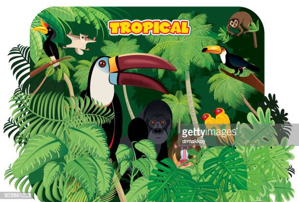 tropical rainforest and toucan - costa rica stock illustrations, clip art, cartoons, & icons