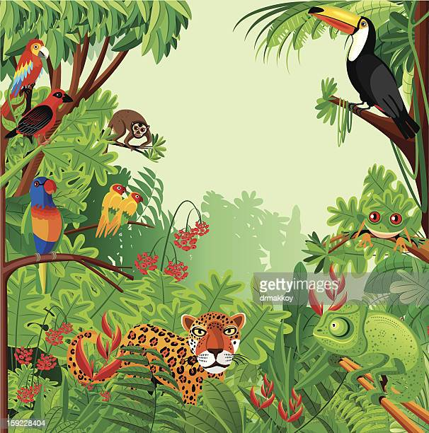 illustrations, cliparts, dessins animés et icônes de forêt tropicale humide - faune