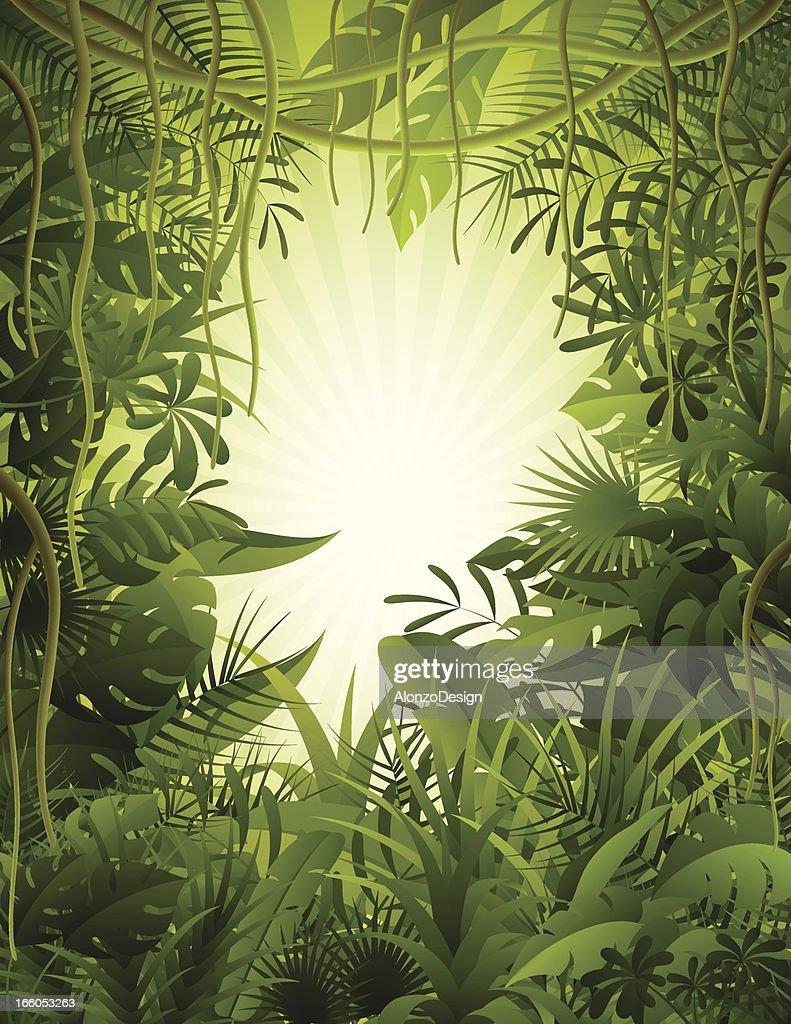 Tropical Rainforest : stock illustration