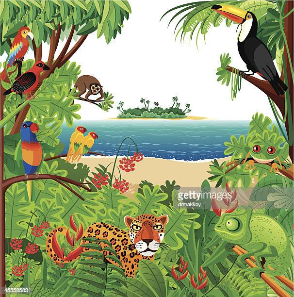tropical rainforest - chameleon stock illustrations, clip art, cartoons, & icons