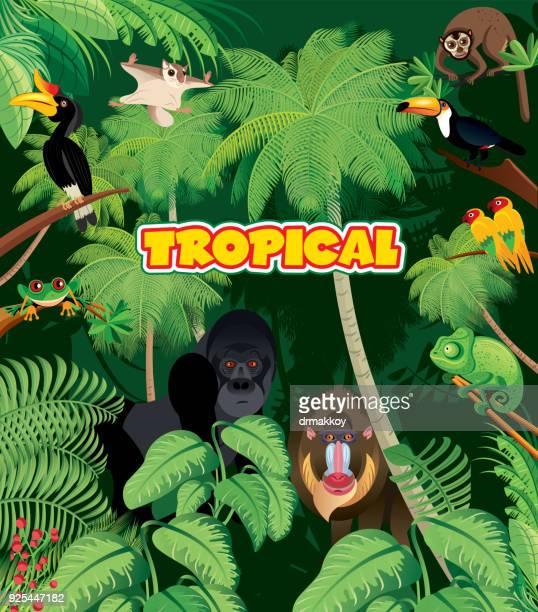 ilustraciones, imágenes clip art, dibujos animados e iconos de stock de selva tropical - biodiversidad