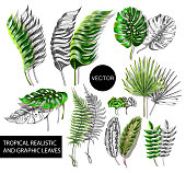 Tropical realistic and graphic leaves elements for your design.