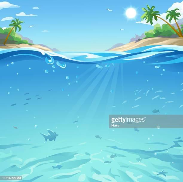 illustrazioni stock, clip art, cartoni animati e icone di tendenza di mare tropicale sotto e sopra la superficie dell'acqua - profondo
