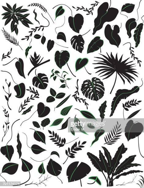 illustrations, cliparts, dessins animés et icônes de silhouettes de plantes tropicales / feuilles et plantes tropicales ombragées - tropical