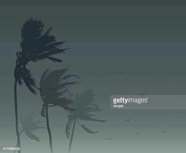 tropical storm - coconut leaf stock illustrations, clip art, cartoons, & icons