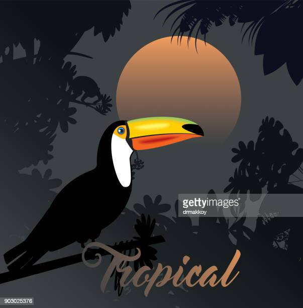 Tropical Toucan Background