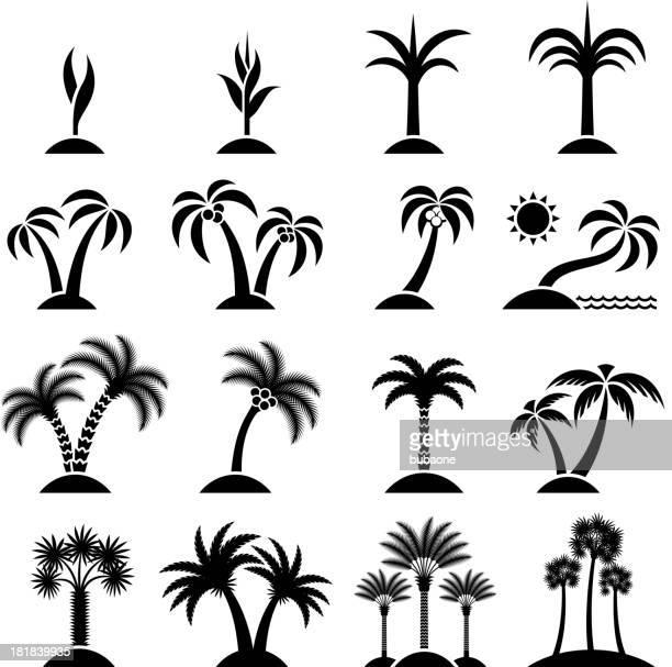 ilustraciones, imágenes clip art, dibujos animados e iconos de stock de árbol tropical colección de iconos de vector negro conjunto & blanco - palmera