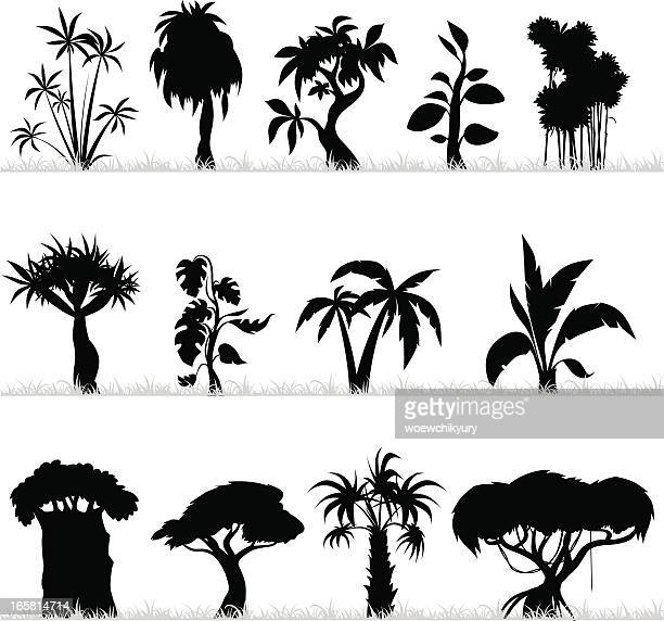 illustrations, cliparts, dessins animés et icônes de arbres tropicaux - baobab