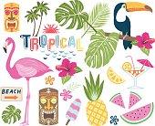 Tropical Vector Collection