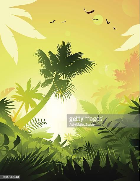 ilustraciones, imágenes clip art, dibujos animados e iconos de stock de tropical - vista de ángulo bajo