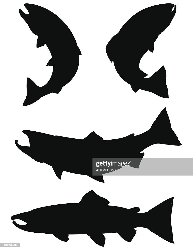 Trout and Salmon silhouettes