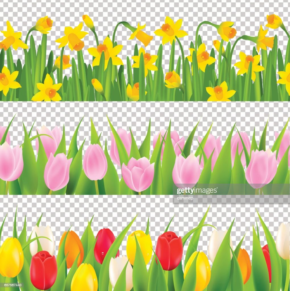 Tulip And Narcissus Border With Transparent Background