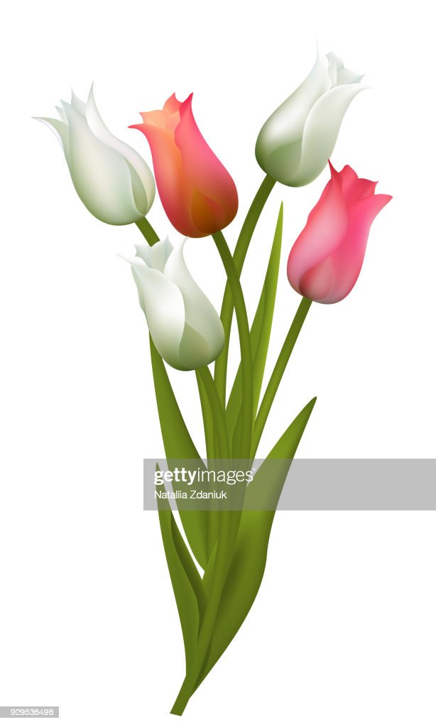 Tulips. Flowers. Floral background. Bouquet. Buds. Green leaves. Vector.