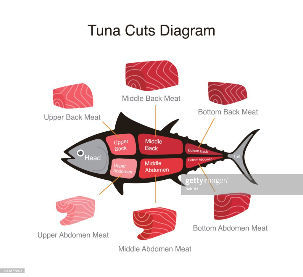 Diagram Of Fish Meat - Complete Wiring Diagrams •