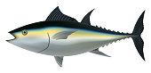 Tuna fish mockup, realistic style
