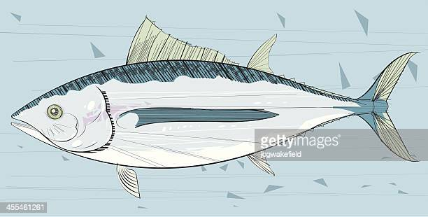 tuna - animal spine stock illustrations, clip art, cartoons, & icons