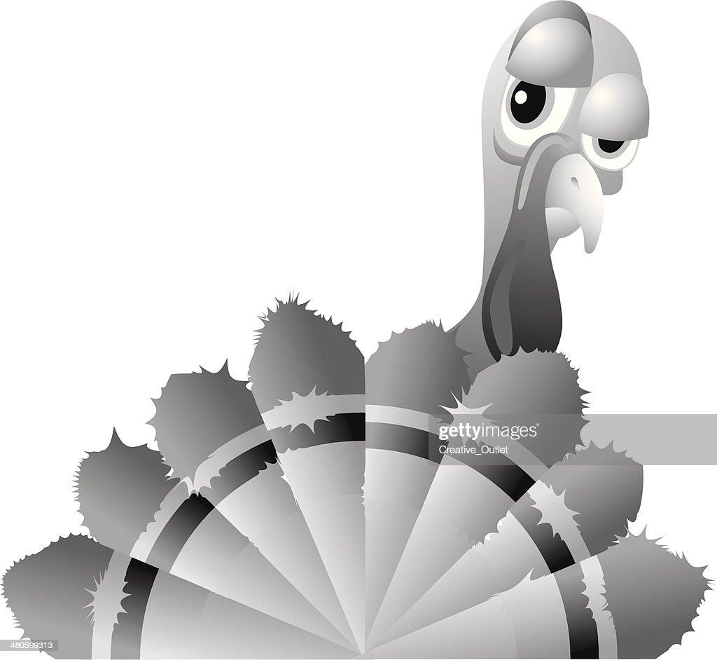 Turkey Feathers : Vector Art