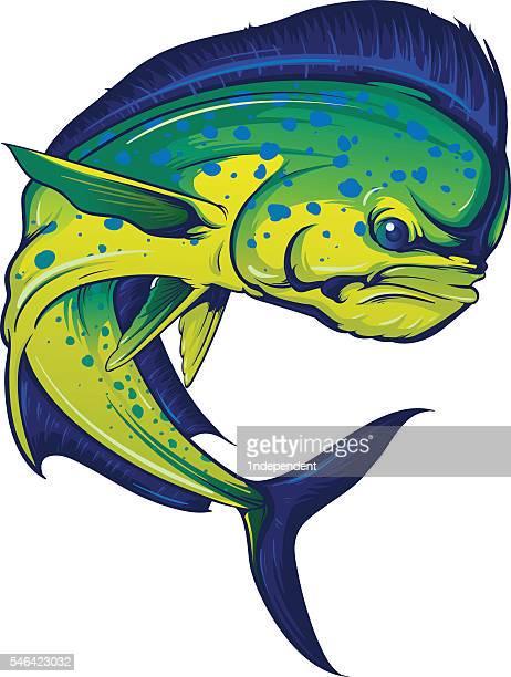 turning mahi mahi - dolphin fish stock illustrations