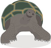 Turtle, a great realistic turtle.