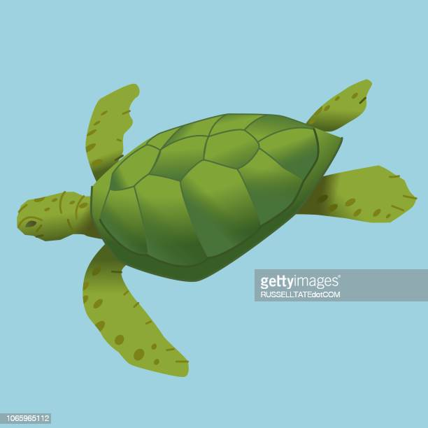 turtle diving - turtle stock illustrations