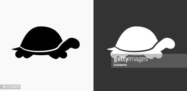 ilustraciones, imágenes clip art, dibujos animados e iconos de stock de icono de tortuga - tortugas