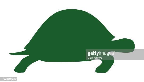 ilustraciones, imágenes clip art, dibujos animados e iconos de stock de la tortuga - tortugas