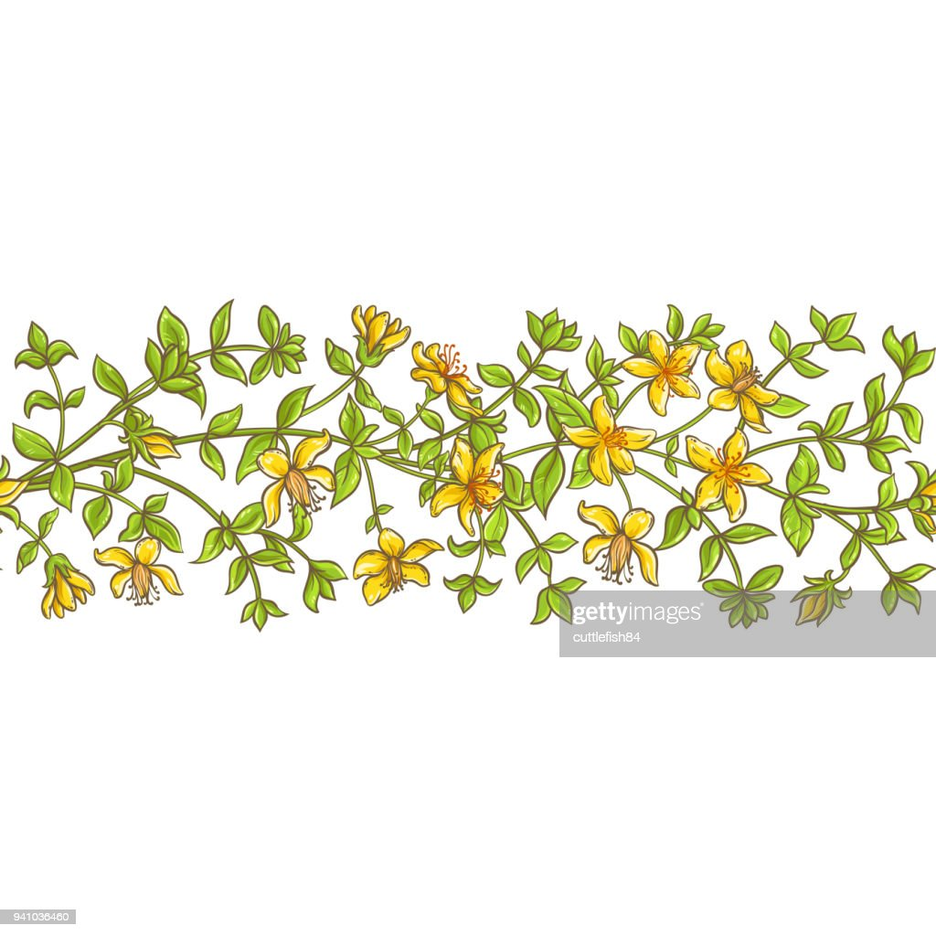 tutsan branch vector pattern