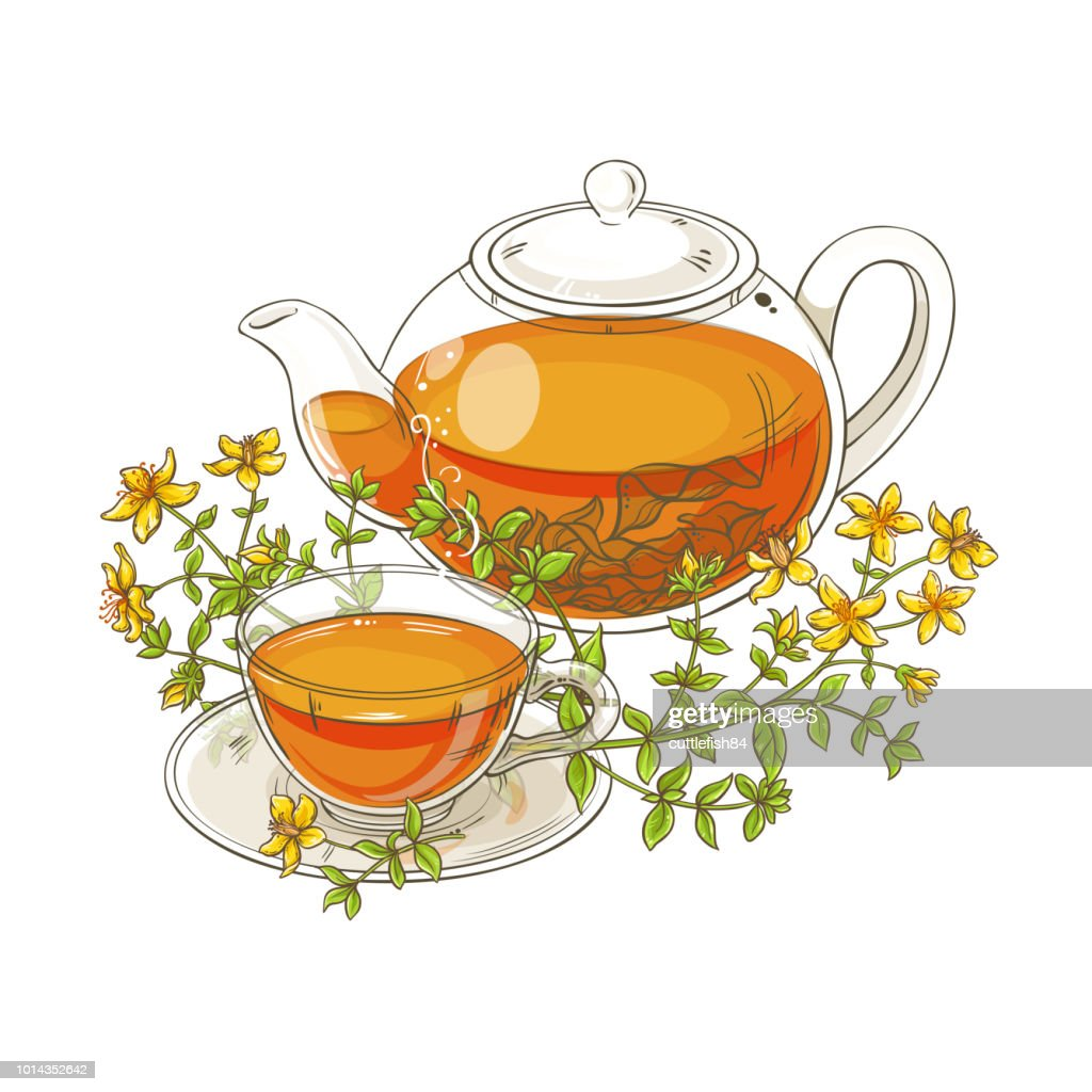 tutsan tea illustration