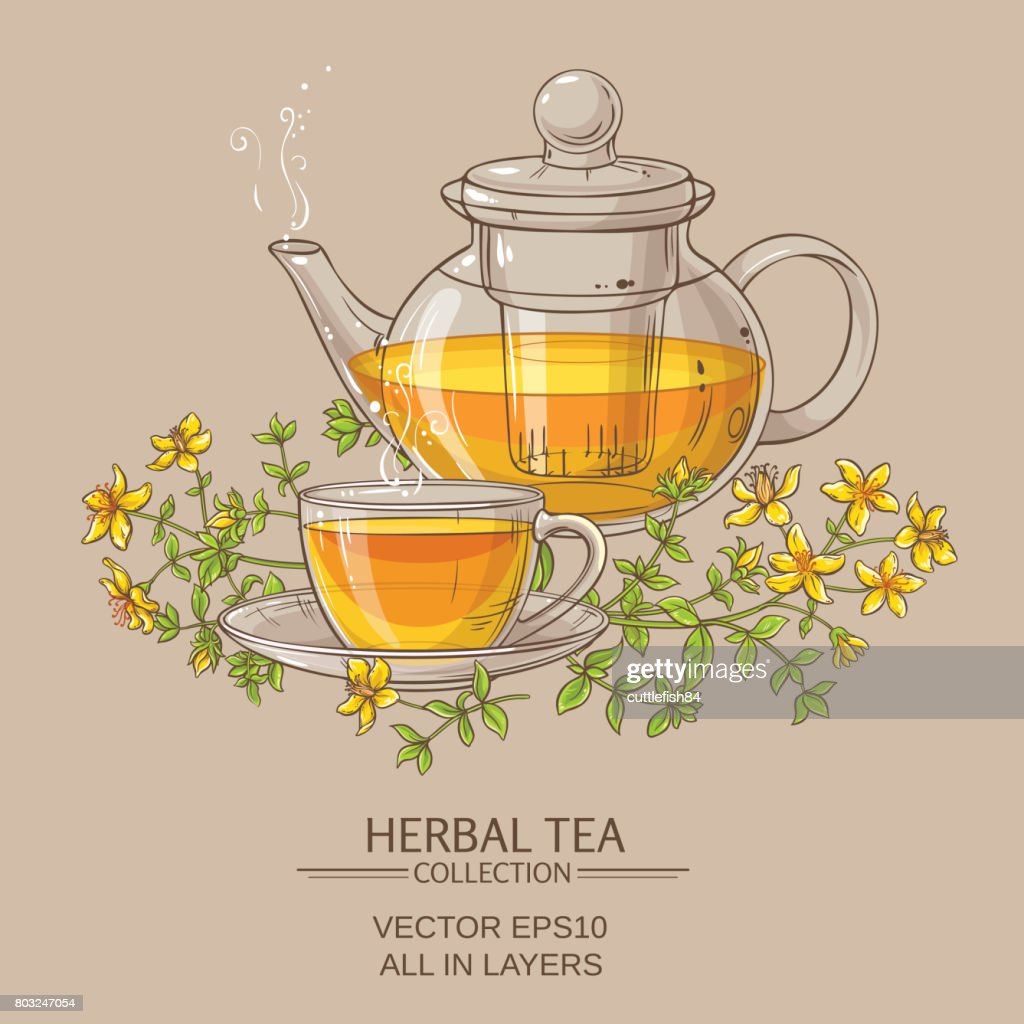 tutsan tea vector illustration